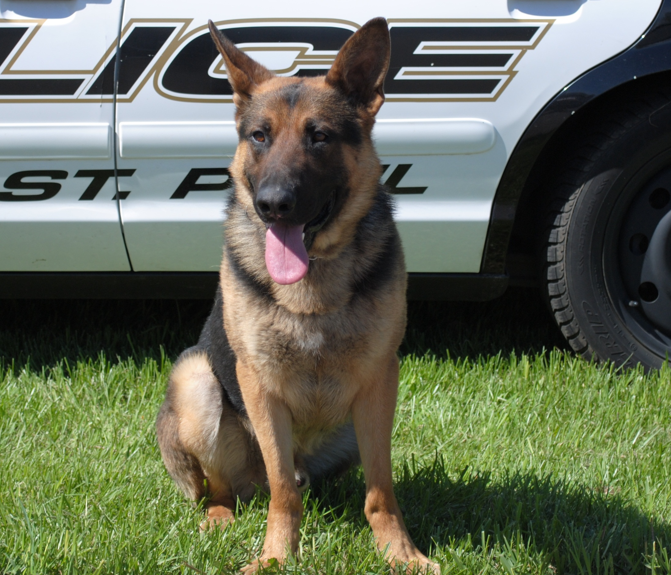 Photo of K9 Kanto