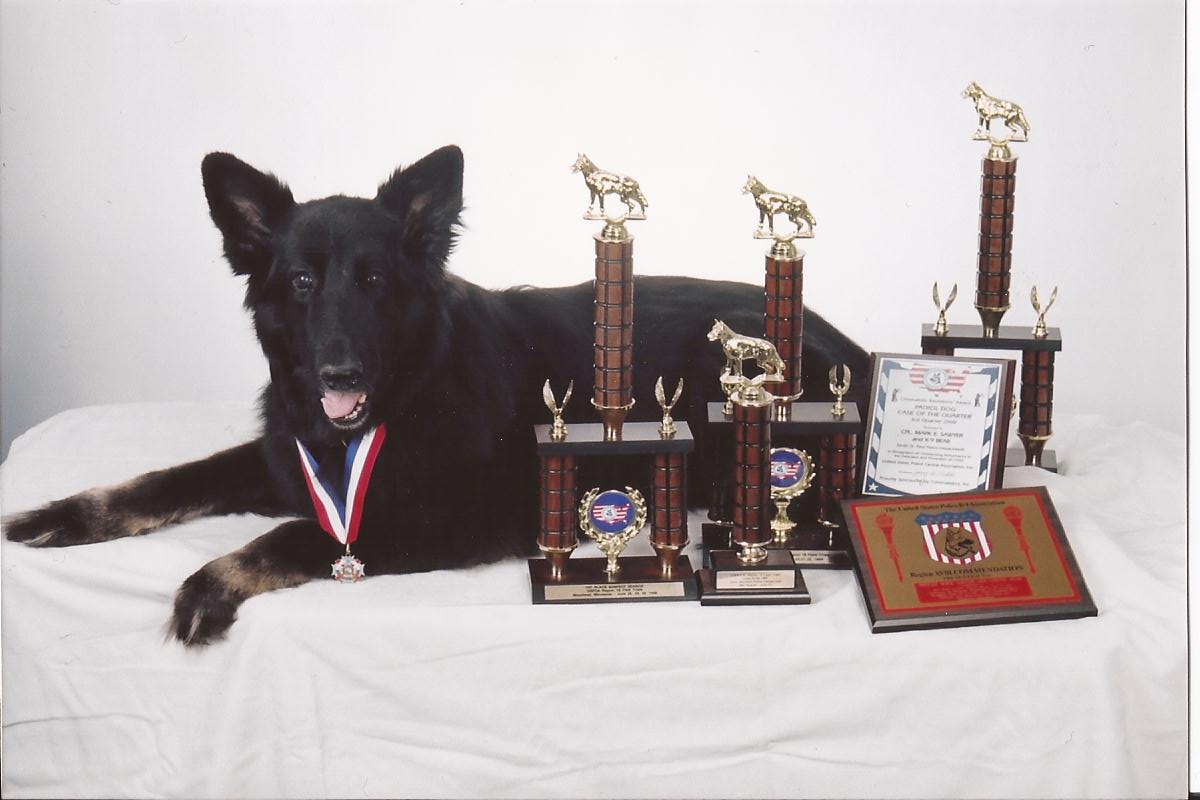 Photo of K9 Bear
